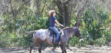 V3_horserunning