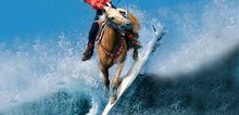 Small2_surf_horse
