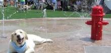 Small2_dog_park4