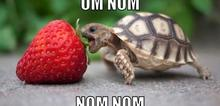 Small2_tortoise-meme-generator-om-nom-nom-nom-18ab6a