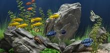 Small2_aquarium_lovers