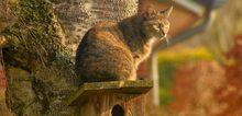Small2_cat-2195538-1170x780