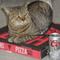 Small_bodyshop_photos_-_k.k._johnson_the_cat_-_2_mar._19__4__-_1